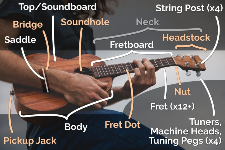 part of the ukulele infographic