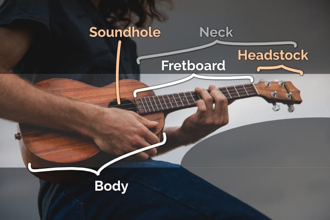 basic parts of the ukulele infographic
