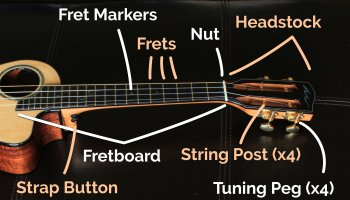 ukulele neck parts labeled