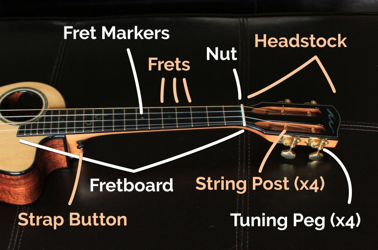 ukulele neck parts labeled